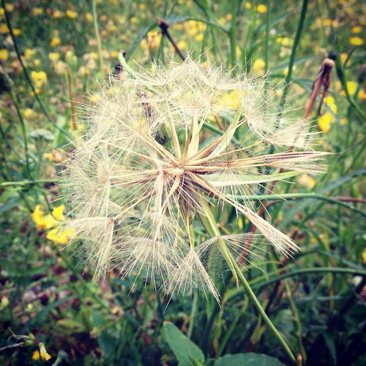 Treating hay fever and seasonal allergies with natural remedies