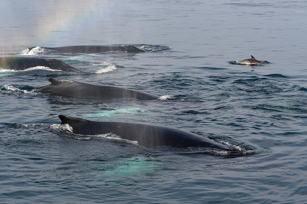 Whale Watch season has an early start in 2019