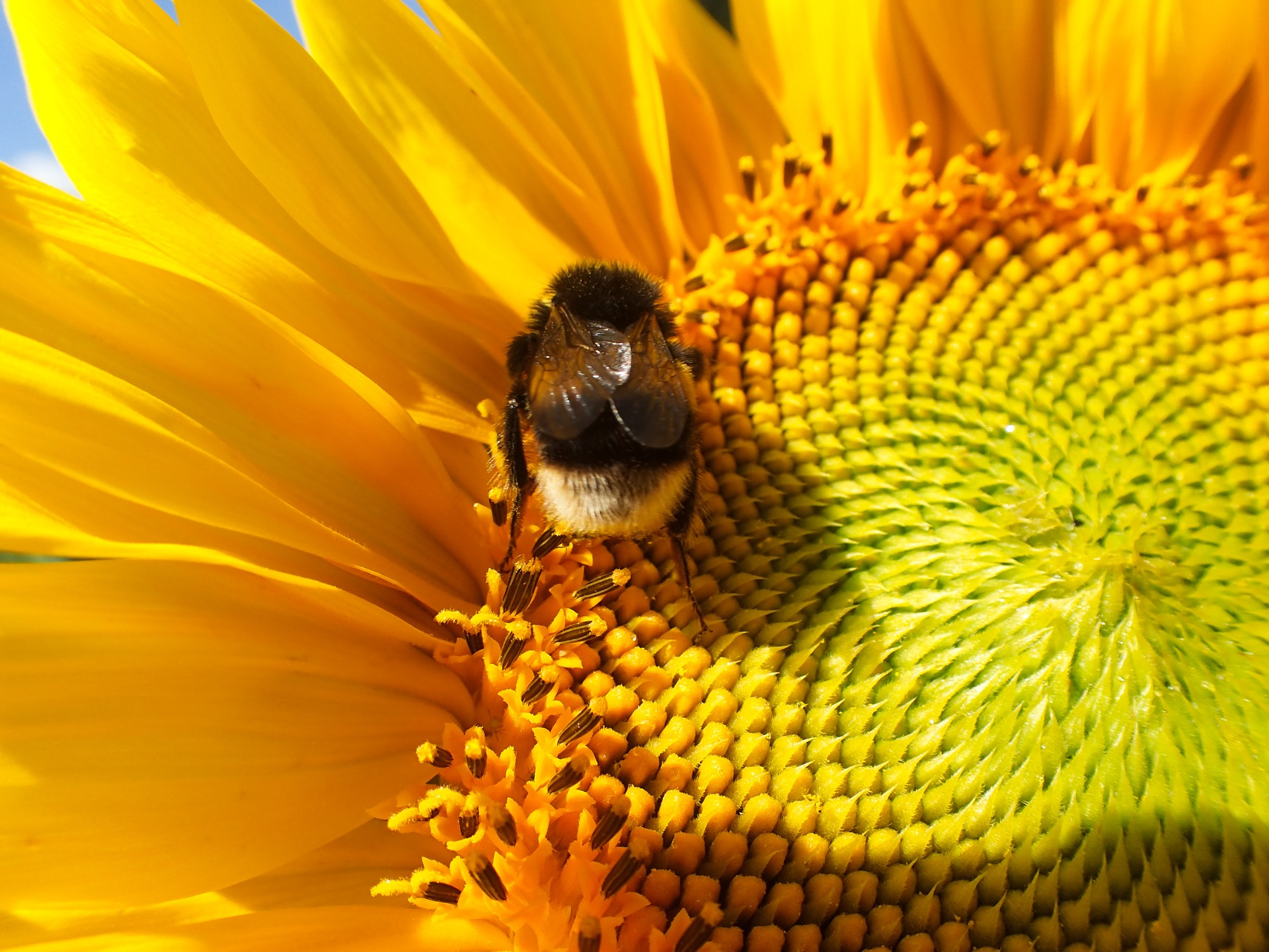We all need to take action to help our declining bee populations