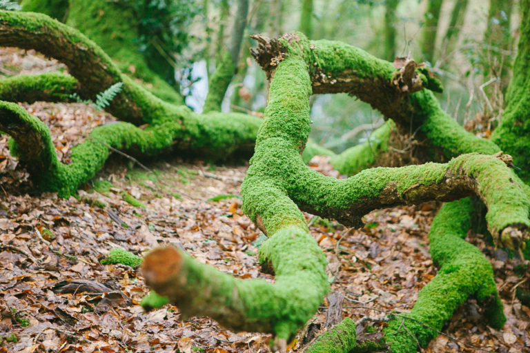 Forest Bathing West Cork postpone launch event