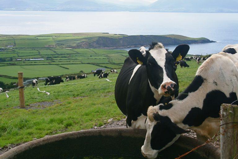 Macra na Feirme confirms flexibility in Young Farmers Schemes