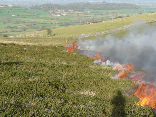 Cork County Council statement on the burning of vegetation