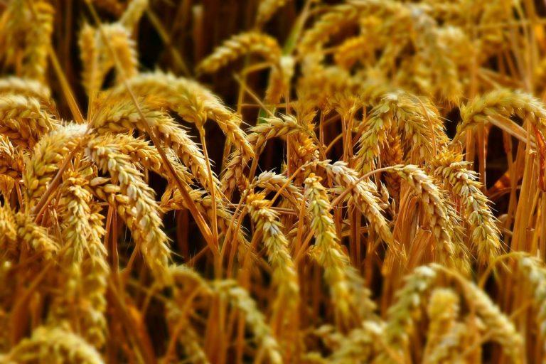 Macra na Feirme rejects EU Farm to Fork Strategy
