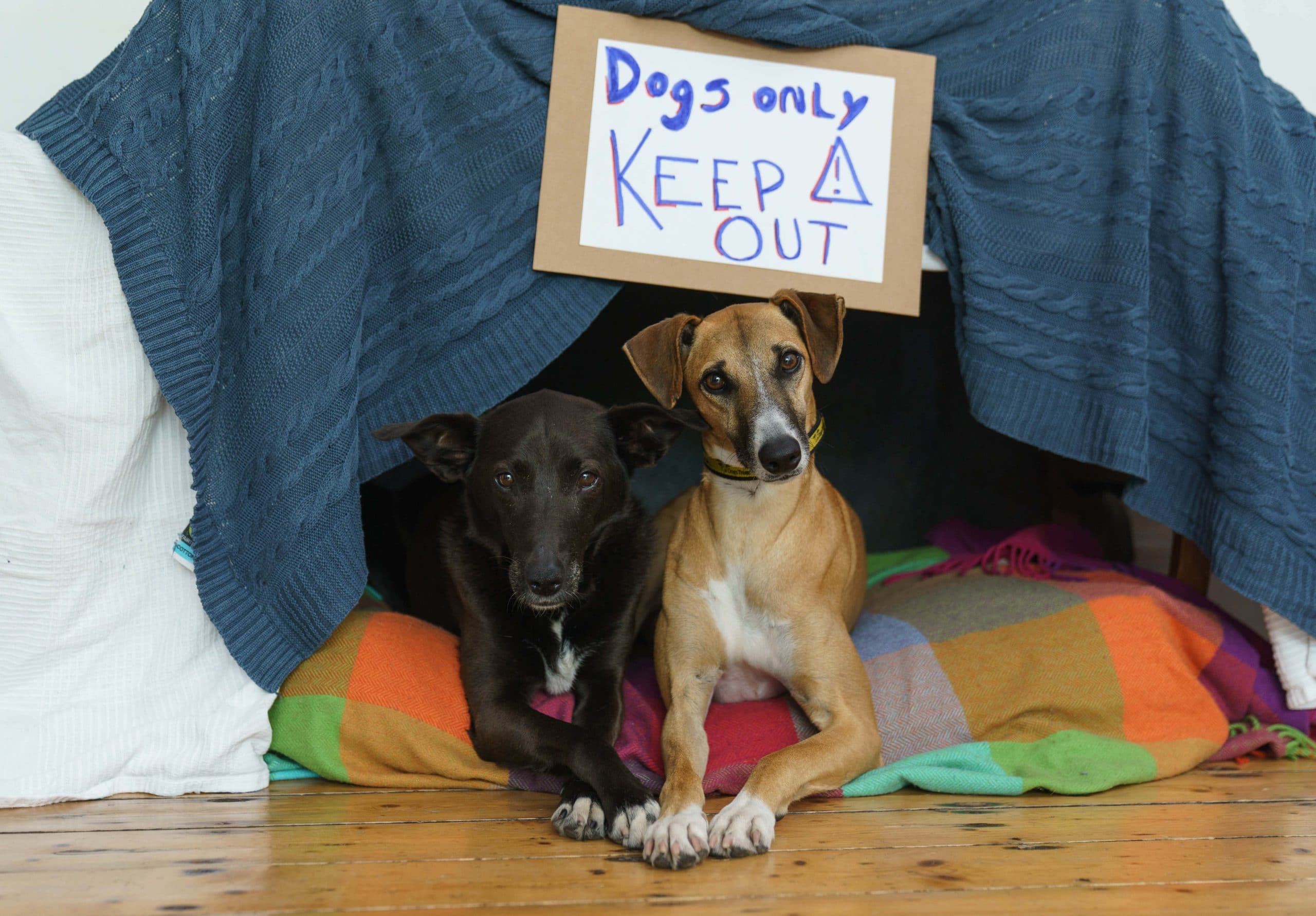 Respect your pet's space and 'let sleeping dogs lie'