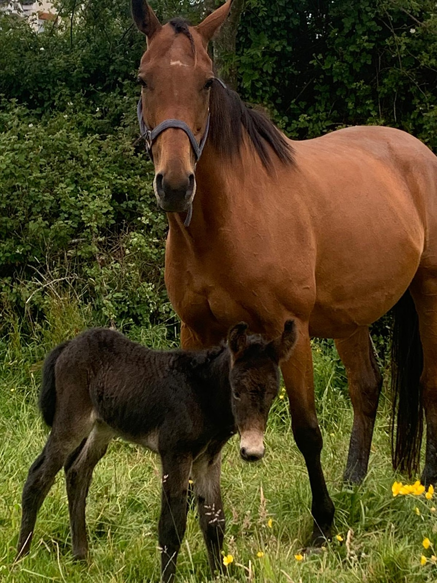 Throughbred breeder gets a surprise with arrival of mule foal