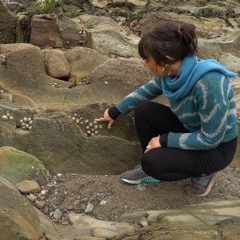 Explore the biodiversity of Cork's seashore from home
