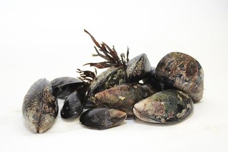 Shellfish toxicity – warning  on the recreational gathering of shellfish on South West coast