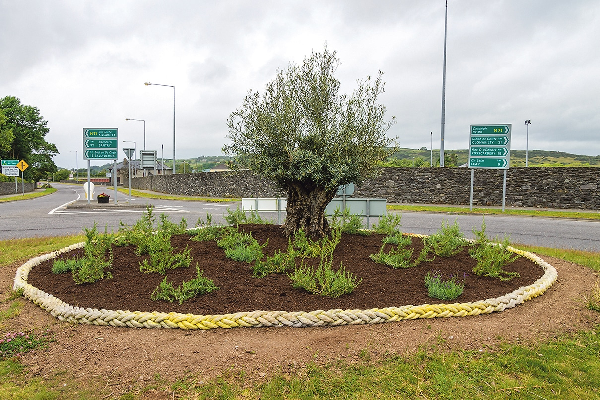 Planting of olive tree reinforces welcome to Skibbereen town