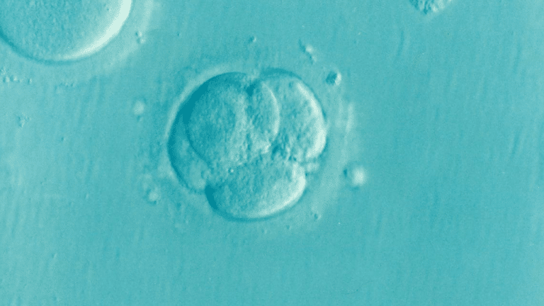 Looking at infertility