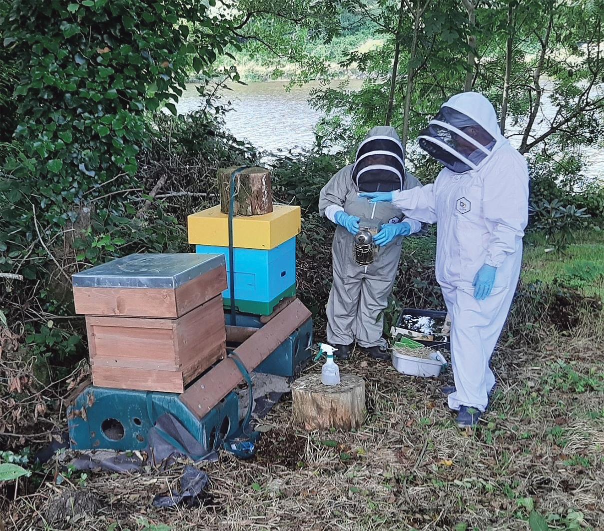 Become a beekeeper