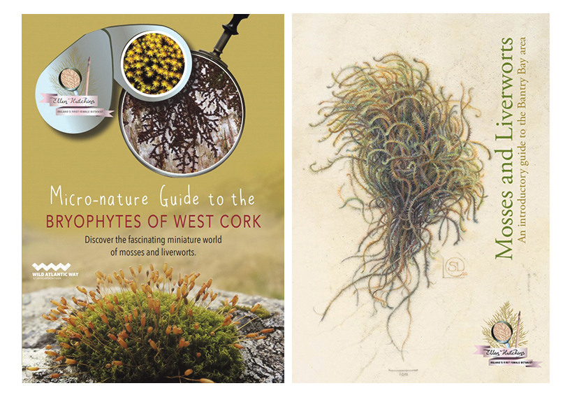 New book gives fascinating insight into the miniature world of mosses and liverworts