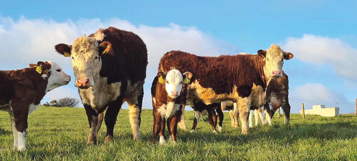 Covid-19 has exacerbated social isolation in farming