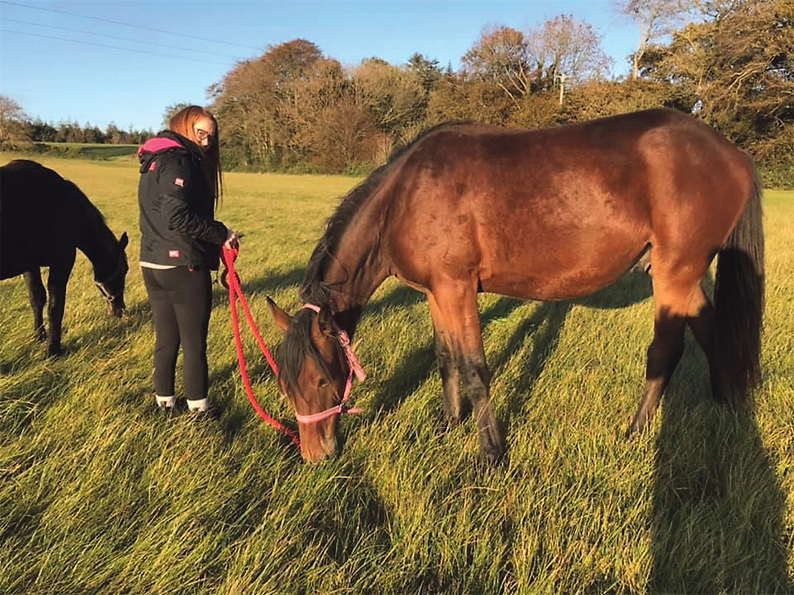 Rescue centre calls for ban on tethering