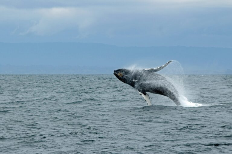 More resources and funding needed to research and deal with beached whales