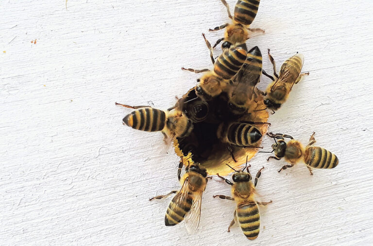 We are starving our bees