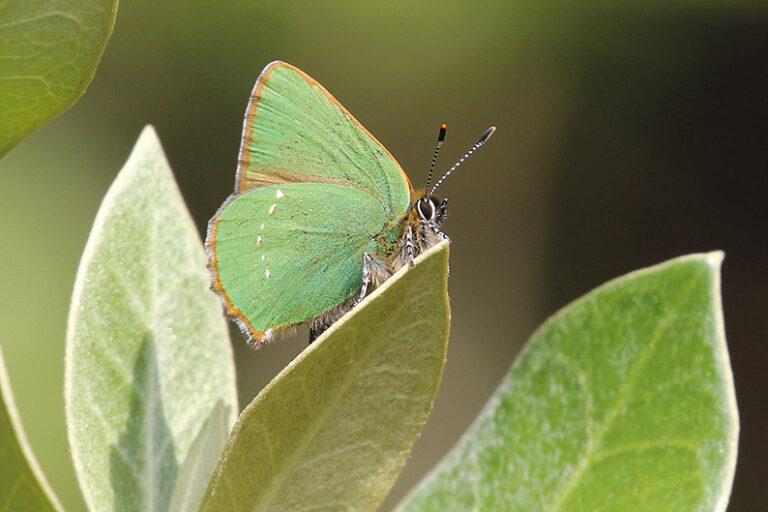 Butterflies in West Cork