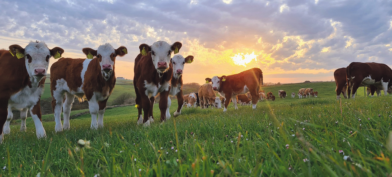 Farmers want to be a part of the solution
