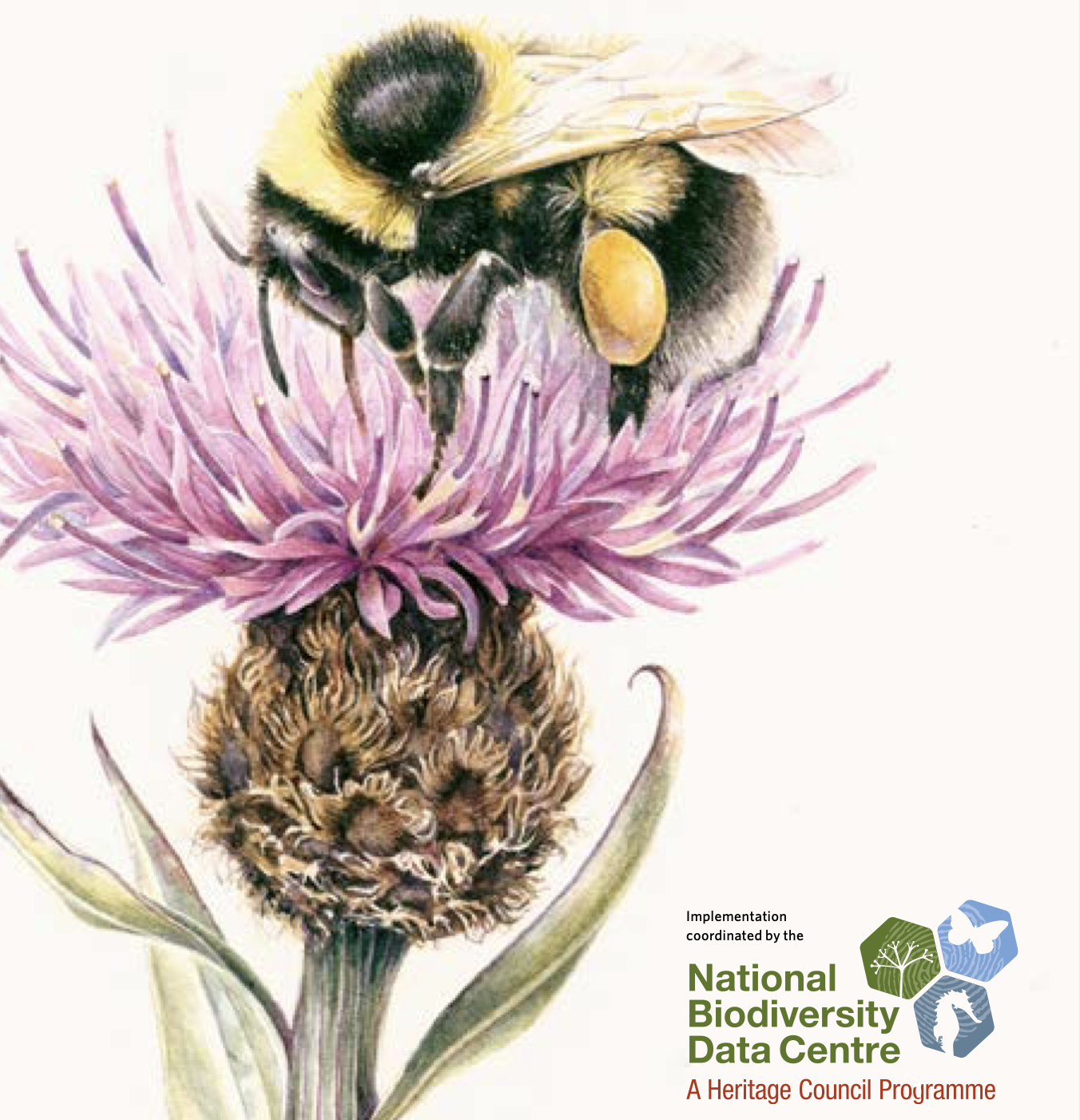 West Cork towns embark on pollinator plans