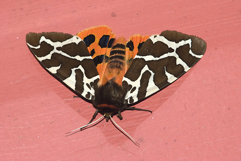 Moths in West Cork