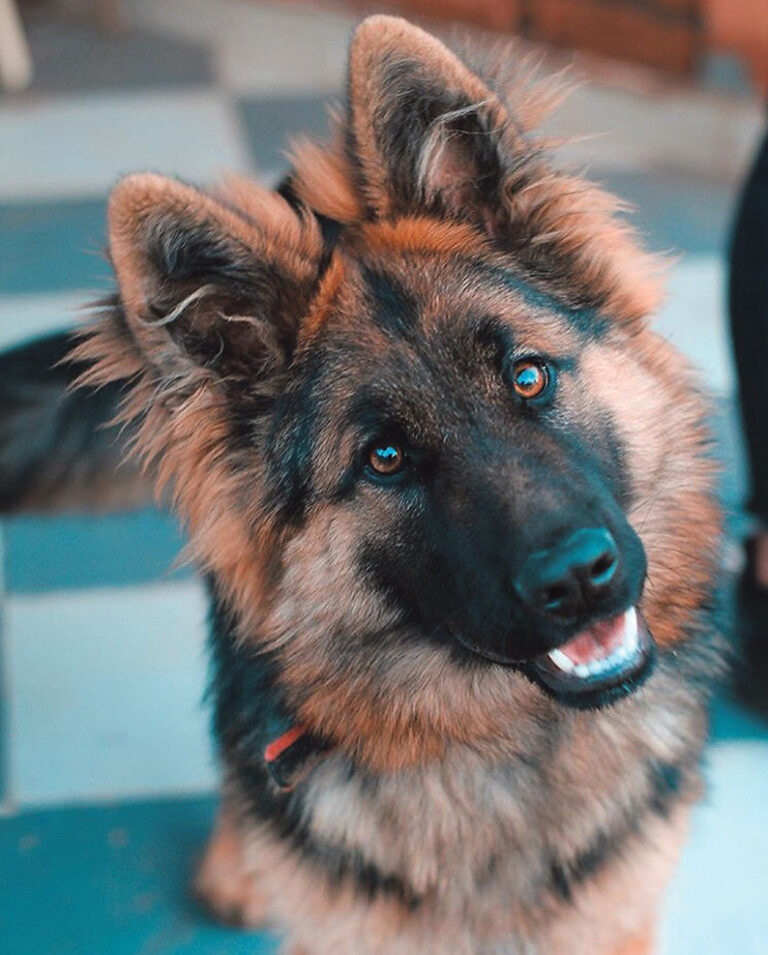 Engaging with your dog in a meaningful manner