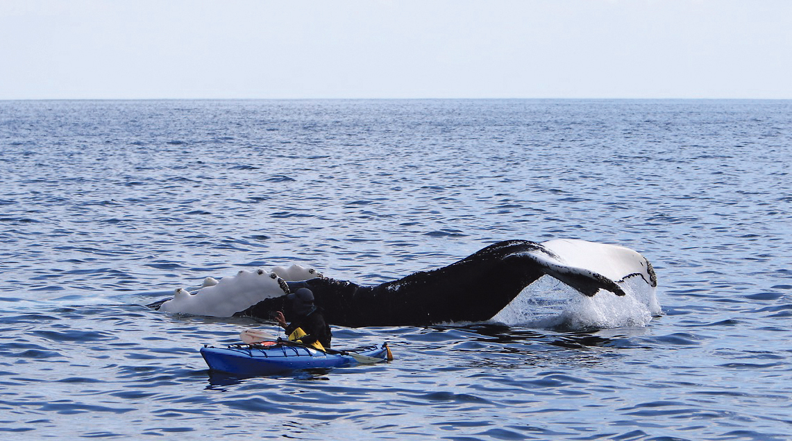 Irish Whale and Dolphin Group reports on changing trends in our seas