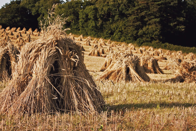 Reminiscing on the traditions surrounding the end of the harvest