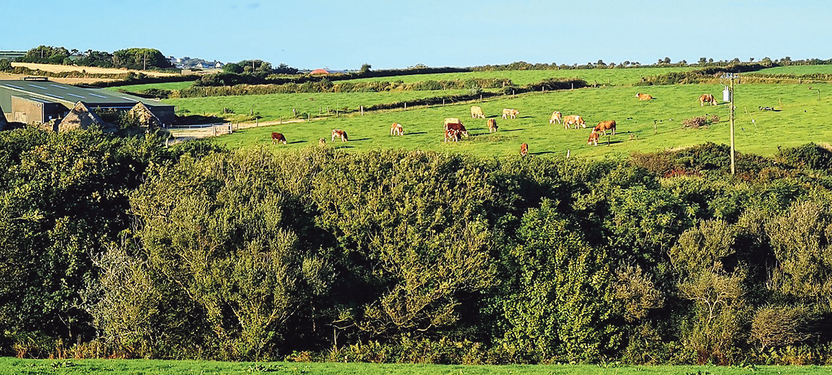Farmers hoping for signs of order out of chaos